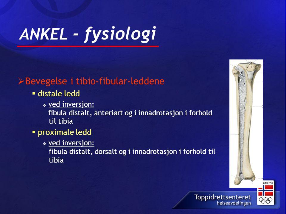 ANKEL - fysiologi Bevegelse i tibio-fibular-leddene distale ledd