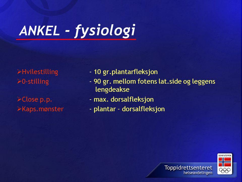 ANKEL - fysiologi Hvilestilling - 10 gr.plantarfleksjon