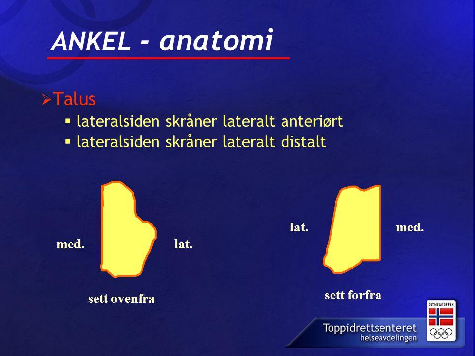 ANKEL - anatomi Talus lateralsiden skråner lateralt anteriørt