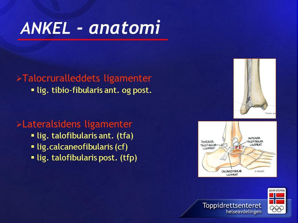 ANKEL - anatomi Talocruralleddets ligamenter