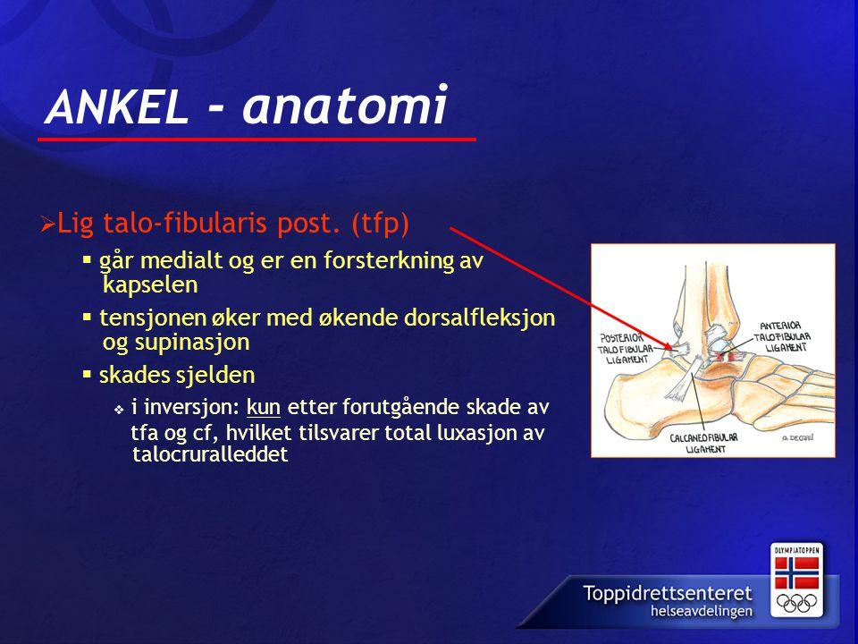 ANKEL - anatomi Lig talo-fibularis post. (tfp)