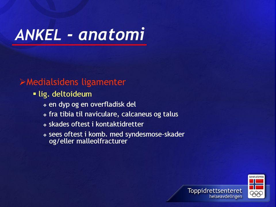 ANKEL - anatomi Medialsidens ligamenter lig. deltoideum