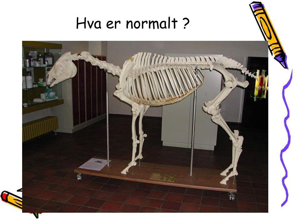 Hva er normalt