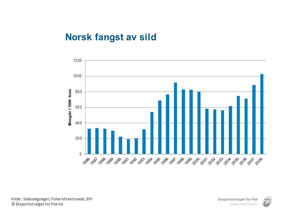Norsk fangst av sild Norsk fangst av sild