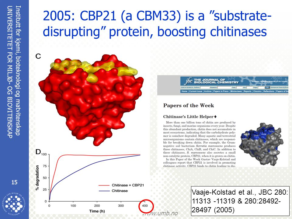 2005: CBP21 (a CBM33) is a substrate-disrupting protein, boosting chitinases