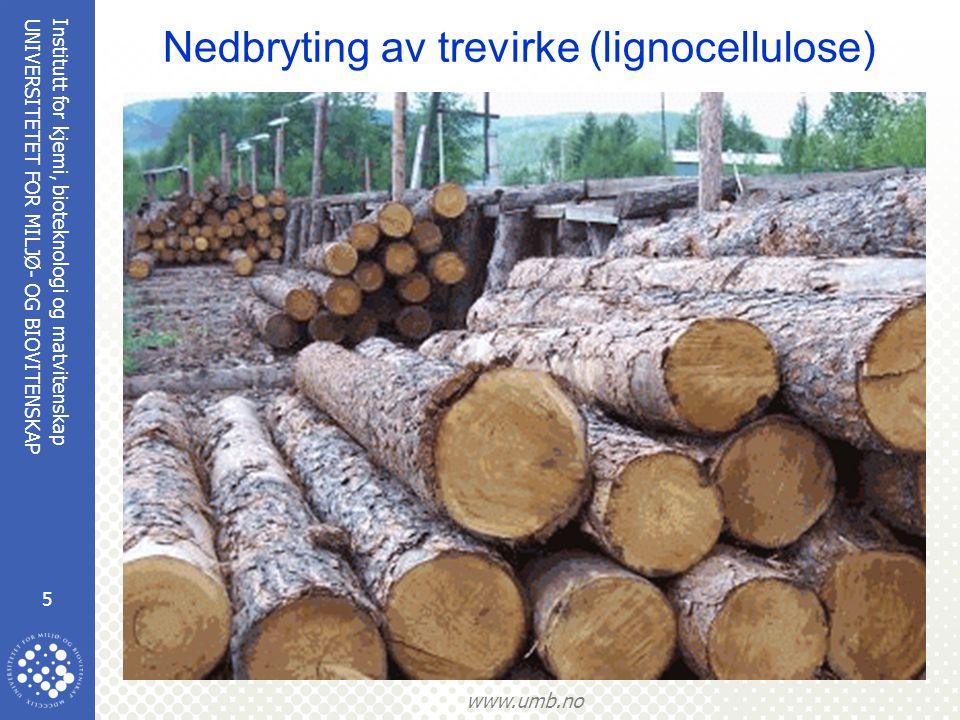 Nedbryting av trevirke (lignocellulose)