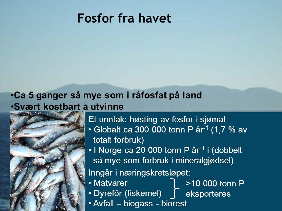 Fosfor fra havet Ca 5 ganger så mye som i råfosfat på land