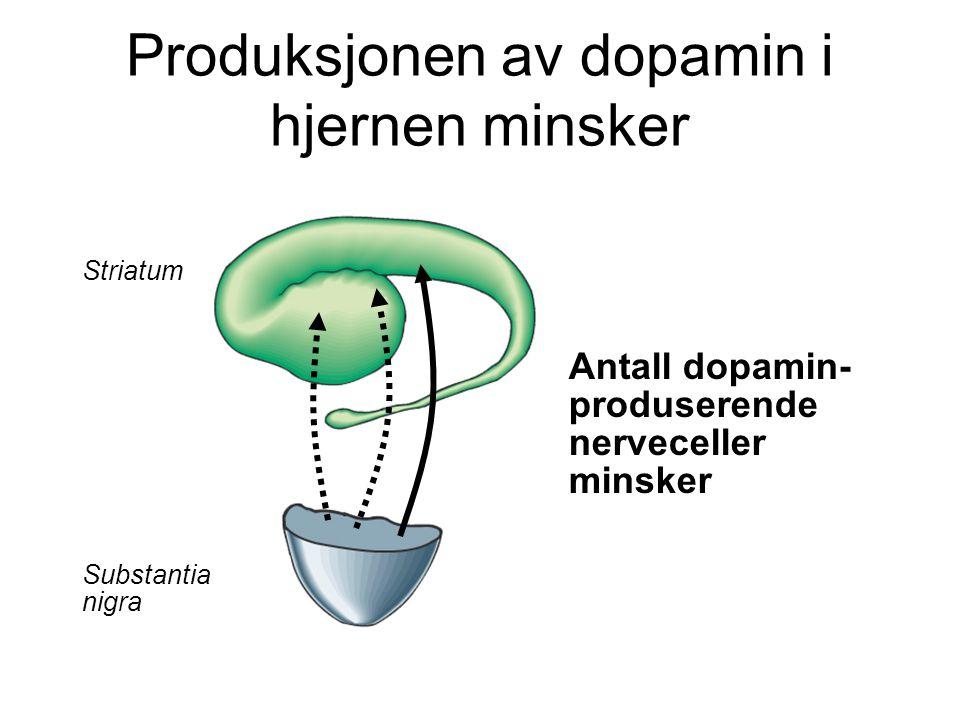 Produksjonen av dopamin i hjernen minsker