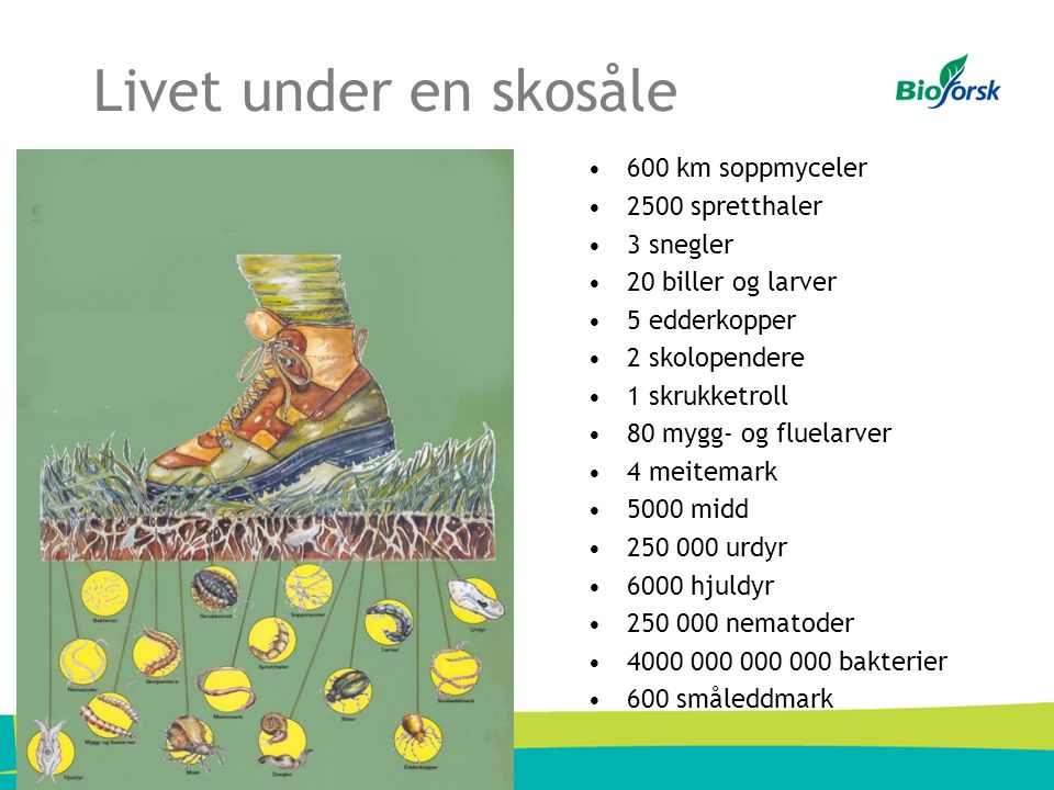 Livet under en skosåle 600 km soppmyceler 2500 spretthaler 3 snegler