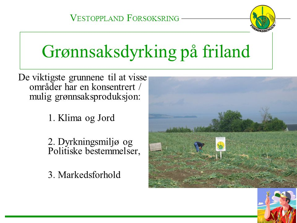 Grønnsaksdyrking på friland