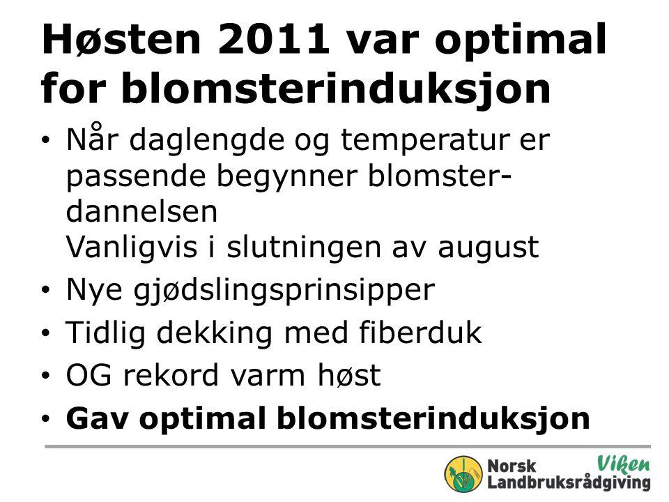 Høsten 2011 var optimal for blomsterinduksjon