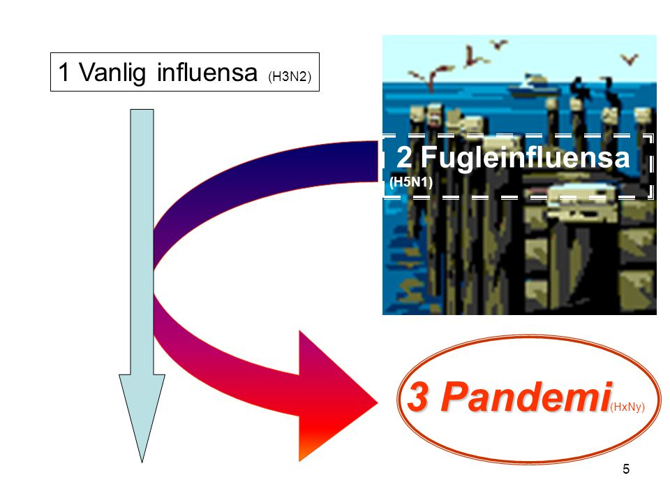 1 Vanlig influensa (H3N2) 2 Fugleinfluensa (H5N1) 3 Pandemi(HxNy)