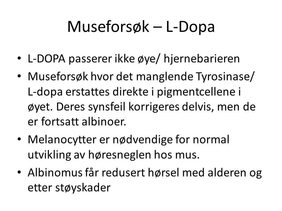Museforsøk – L-Dopa L-DOPA passerer ikke øye/ hjernebarieren