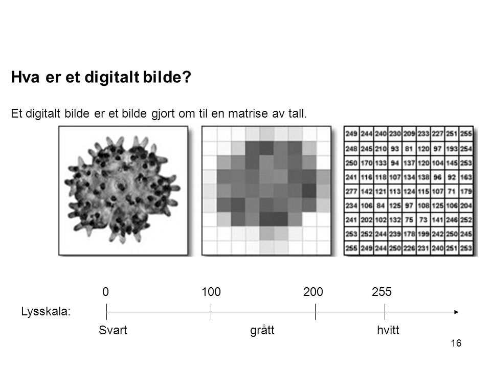 Hva er et digitalt bilde