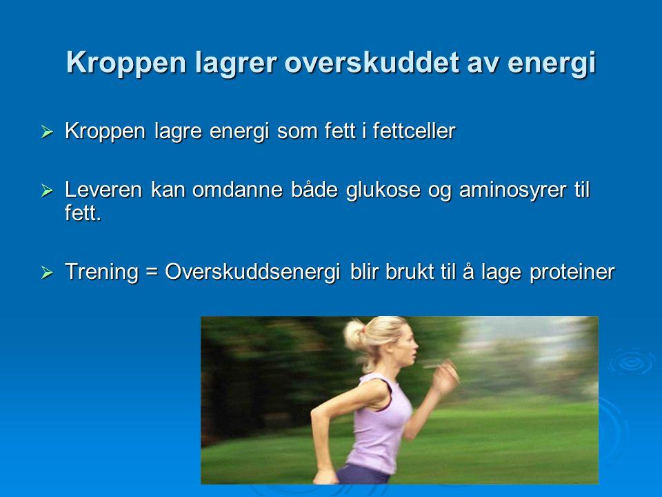 Kroppen lagrer overskuddet av energi