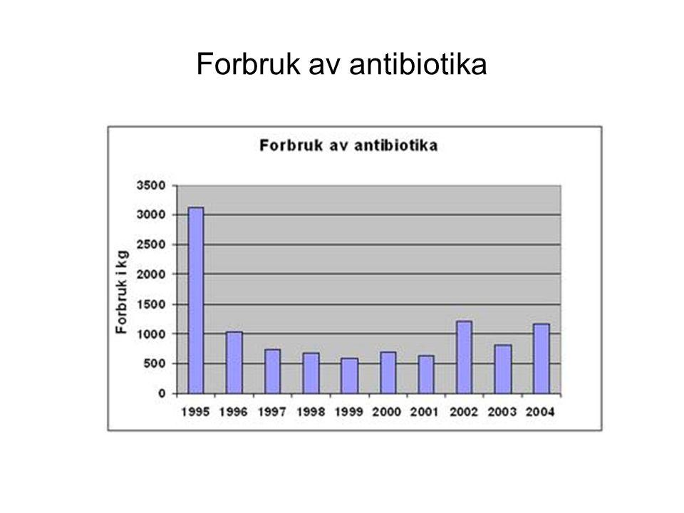 Forbruk av antibiotika