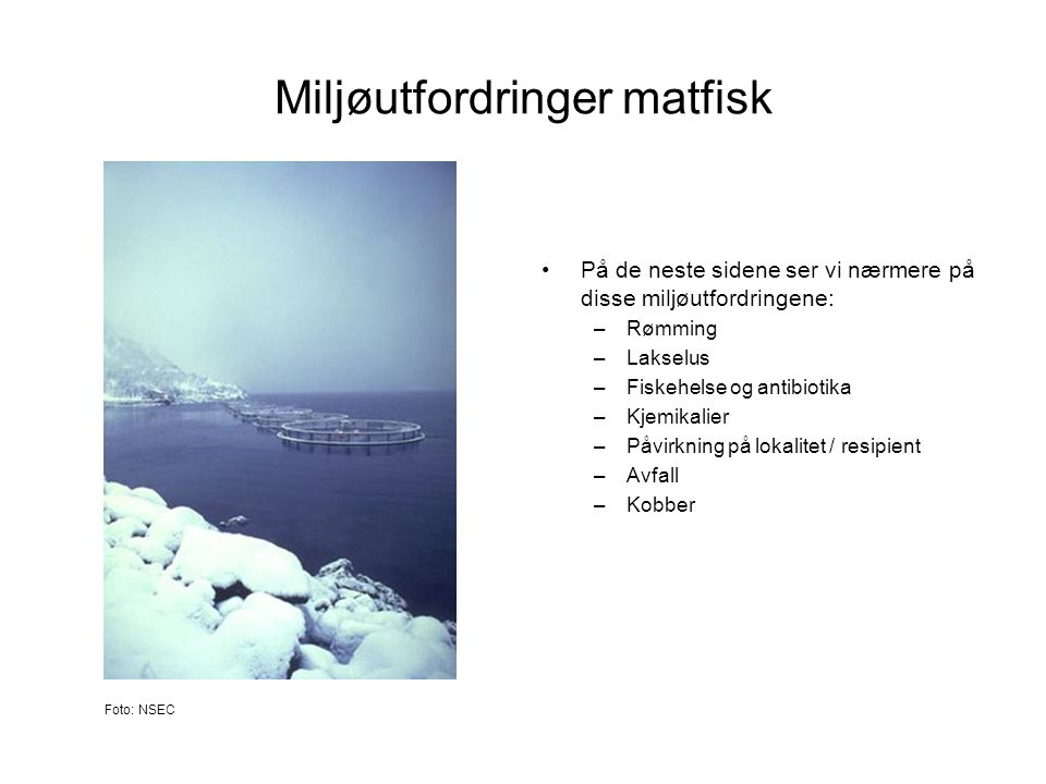 Miljøutfordringer matfisk