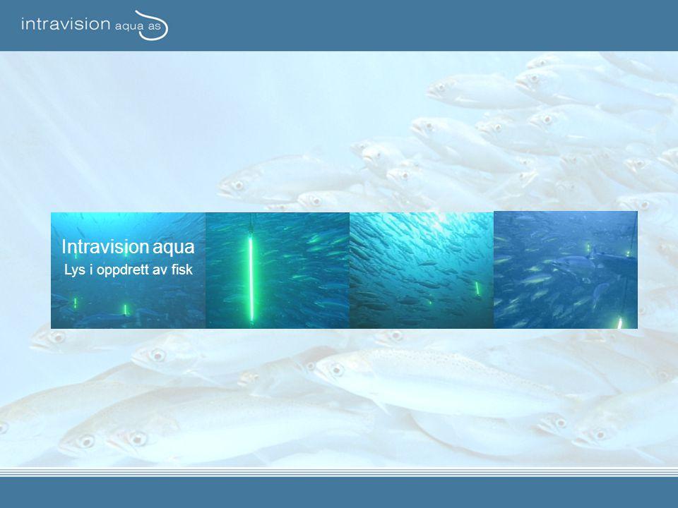 Intravision aqua Lys i oppdrett av fisk