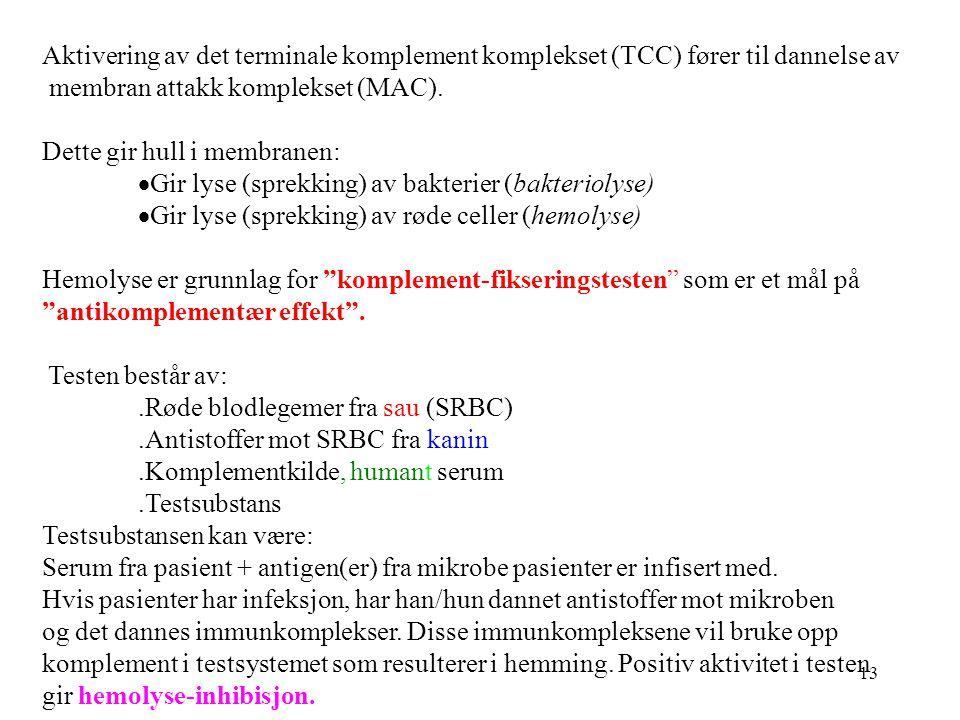 Aktivering av det terminale komplement komplekset (TCC) fører til dannelse av