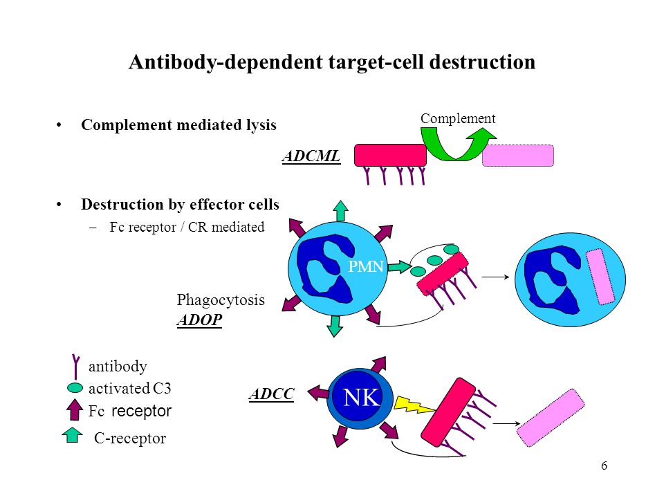 Antibody-dependent target-cell destruction