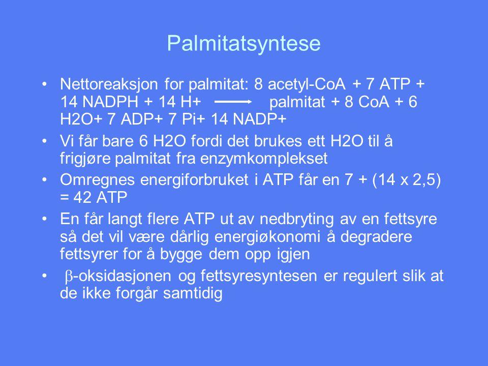Palmitatsyntese Nettoreaksjon for palmitat: 8 acetyl-CoA + 7 ATP + 14 NADPH + 14 H+ palmitat + 8 CoA + 6 H2O+ 7 ADP+ 7 Pi+ 14 NADP+