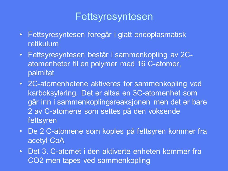 Fettsyresyntesen Fettsyresyntesen foregår i glatt endoplasmatisk retikulum.