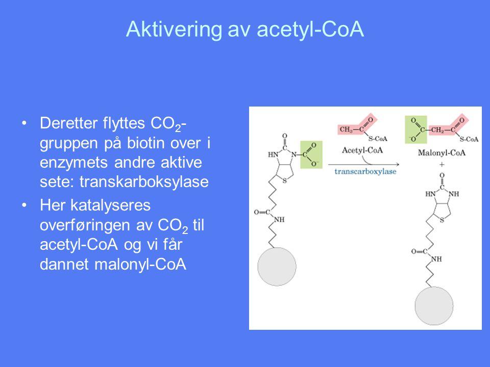 Aktivering av acetyl-CoA