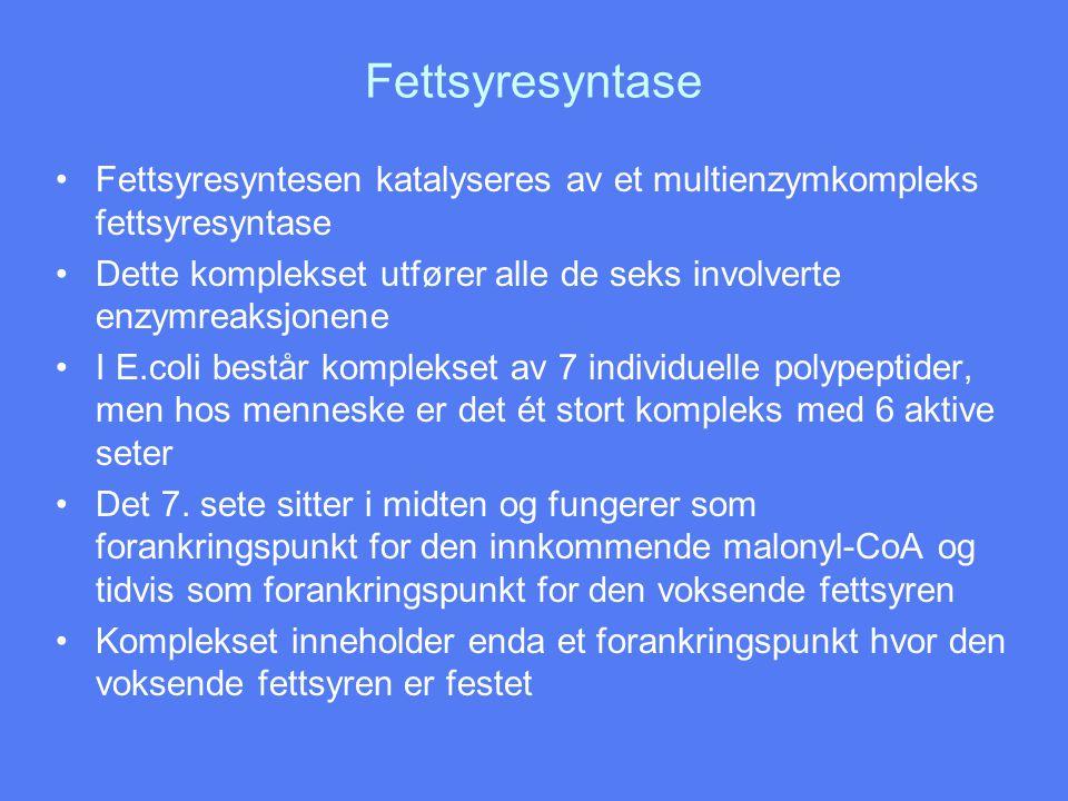Fettsyresyntase Fettsyresyntesen katalyseres av et multienzymkompleks fettsyresyntase.