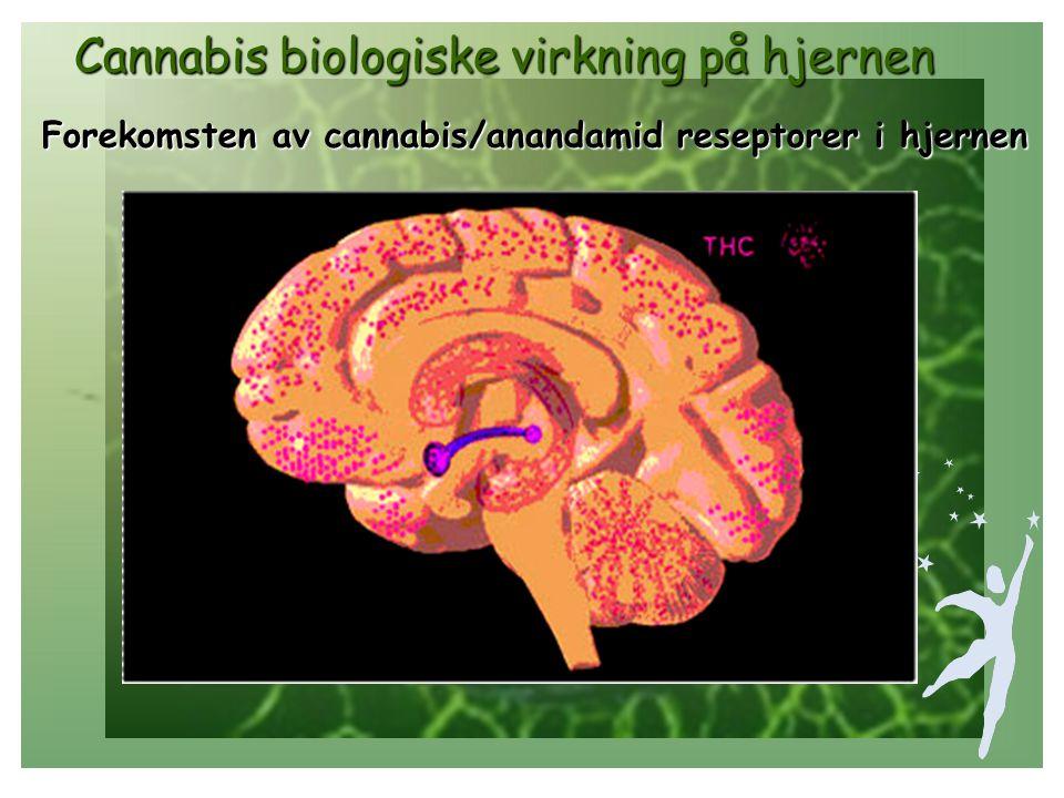 Cannabis biologiske virkning på hjernen