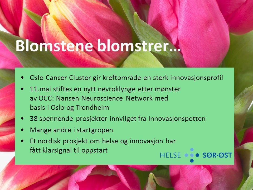 Blomstene blomstrer… Oslo Cancer Cluster gir kreftområde en sterk innovasjonsprofil.
