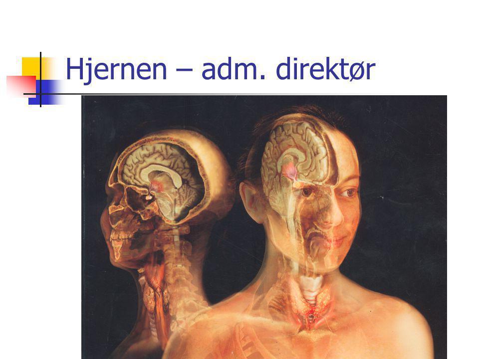 Hjernen – adm.