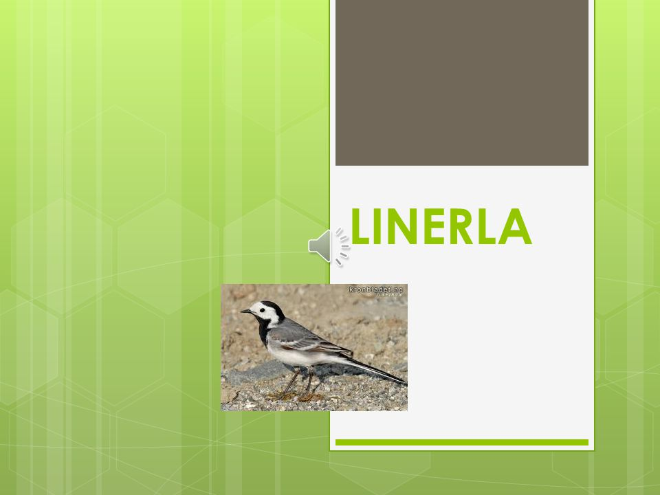LINERLA