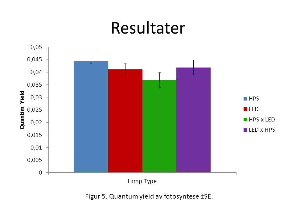 Figur 5. Quantum yield av fotosyntese ±SE.