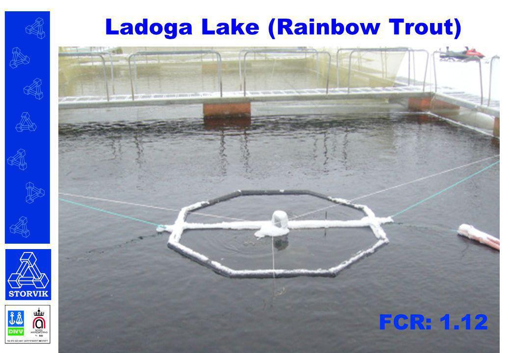 Ladoga Lake (Rainbow Trout)