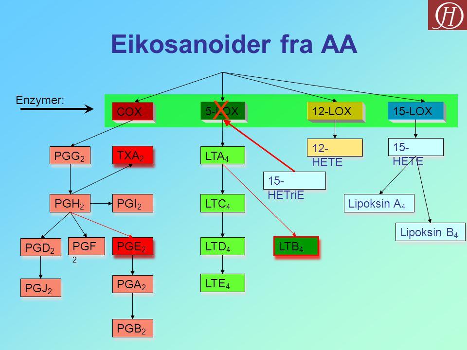 Eikosanoider fra AA X Enzymer: COX 5-LOX 12-LOX 15-LOX 12-HETE 15-HETE
