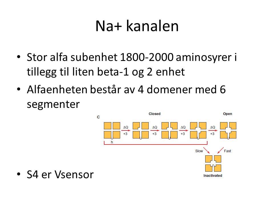 Na+ kanalen Stor alfa subenhet 1800-2000 aminosyrer i tillegg til liten beta-1 og 2 enhet. Alfaenheten består av 4 domener med 6 segmenter.