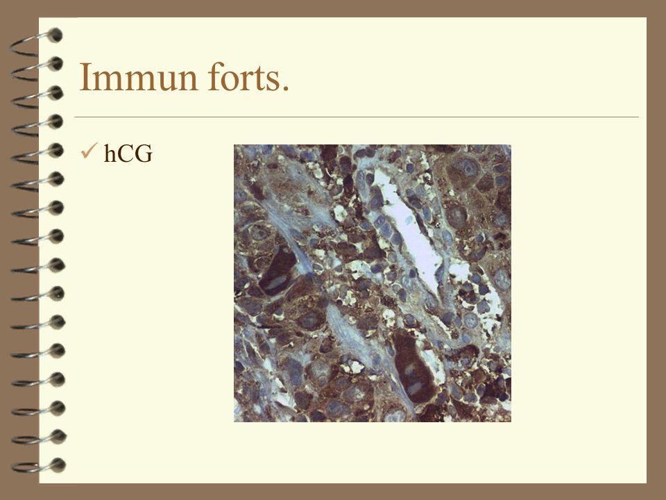 Immun forts. hCG
