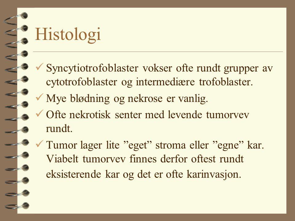 Histologi Syncytiotrofoblaster vokser ofte rundt grupper av cytotrofoblaster og intermediære trofoblaster.