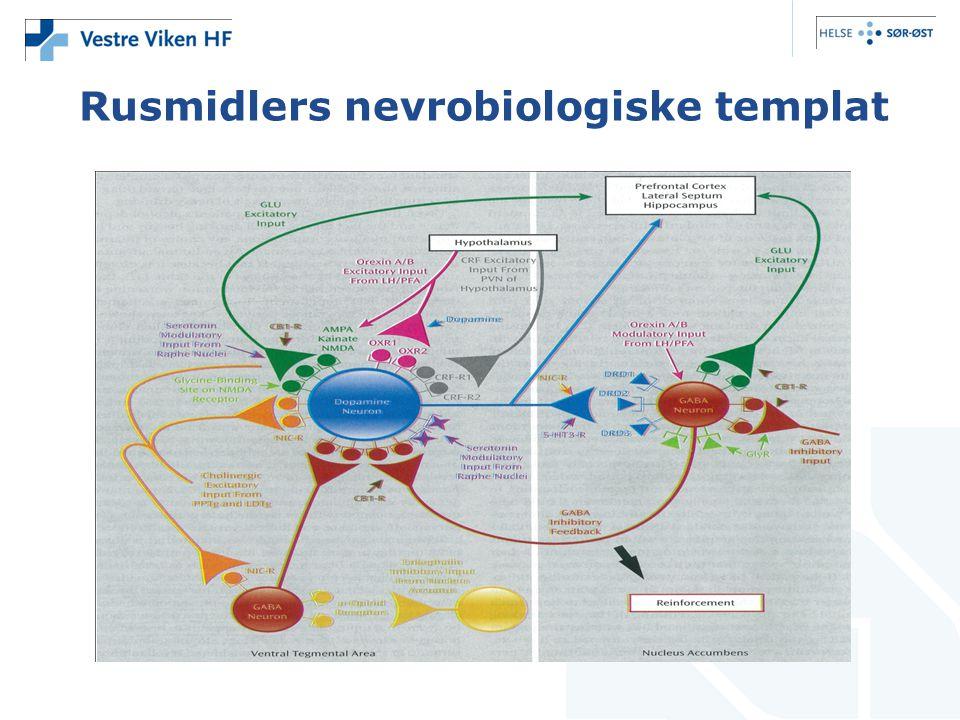Rusmidlers nevrobiologiske templat
