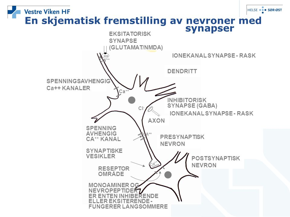 En skjematisk fremstilling av nevroner med synapser