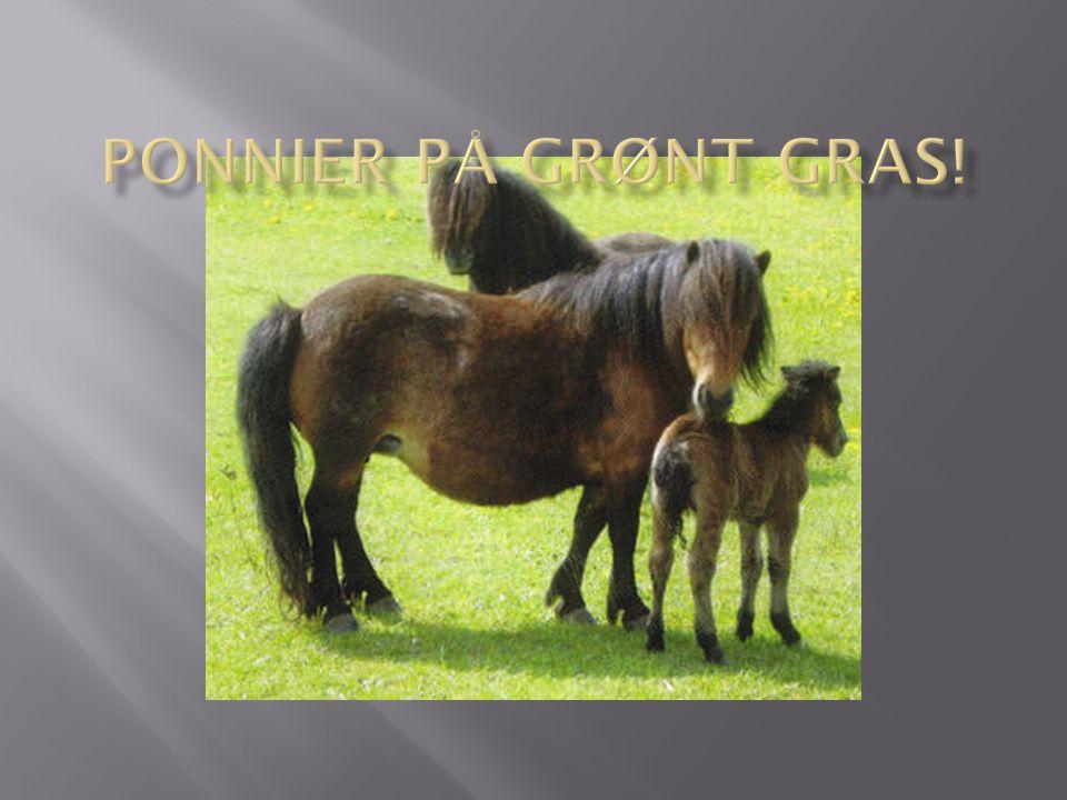 Ponnier på grønt gras!