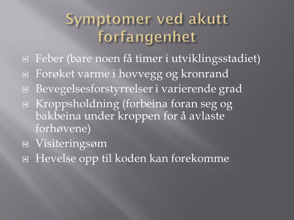 Symptomer ved akutt forfangenhet