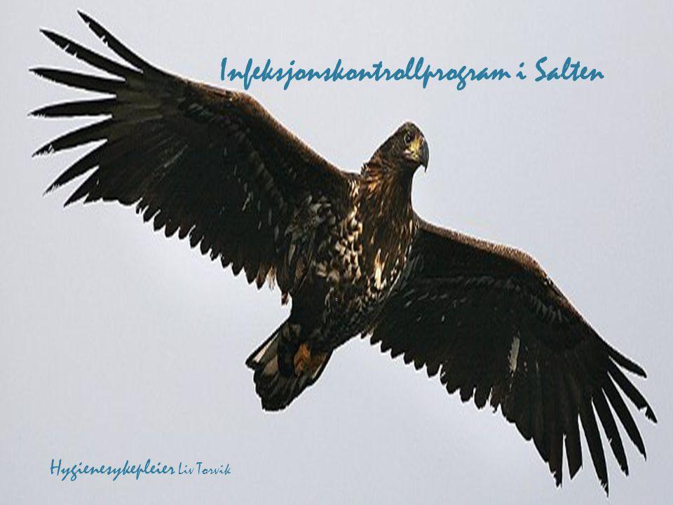 Infeksjonskontrollprogram i Salten
