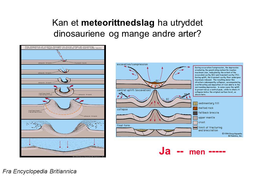 Kan et meteorittnedslag ha utryddet dinosauriene og mange andre arter