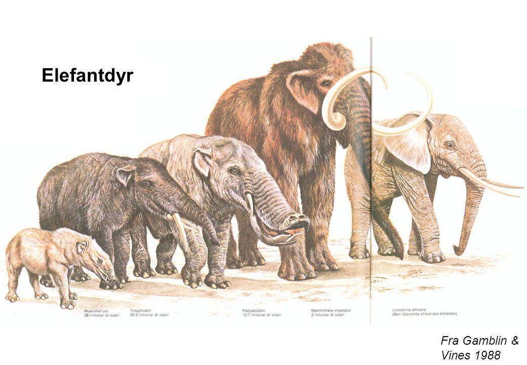 Elefantdyr Fra Gamblin & Vines 1988