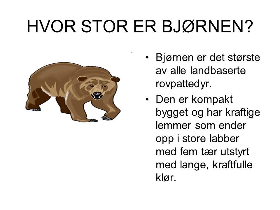 HVOR STOR ER BJØRNEN Bjørnen er det største av alle landbaserte rovpattedyr.