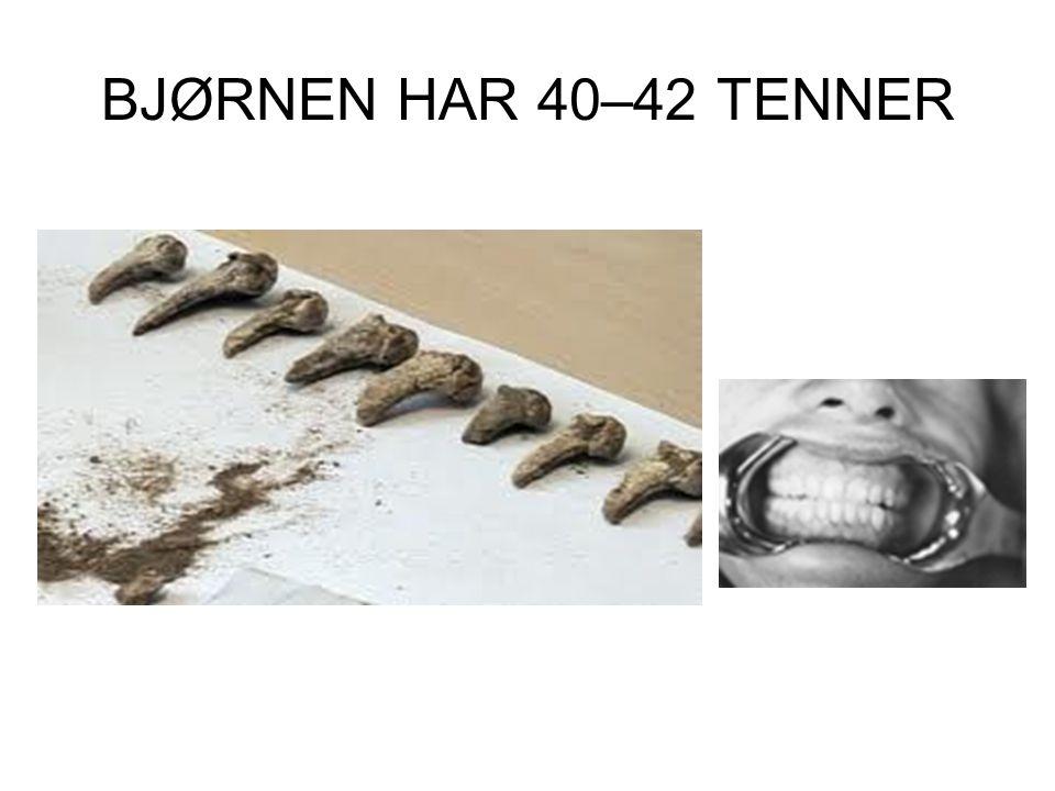 BJØRNEN HAR 40–42 TENNER