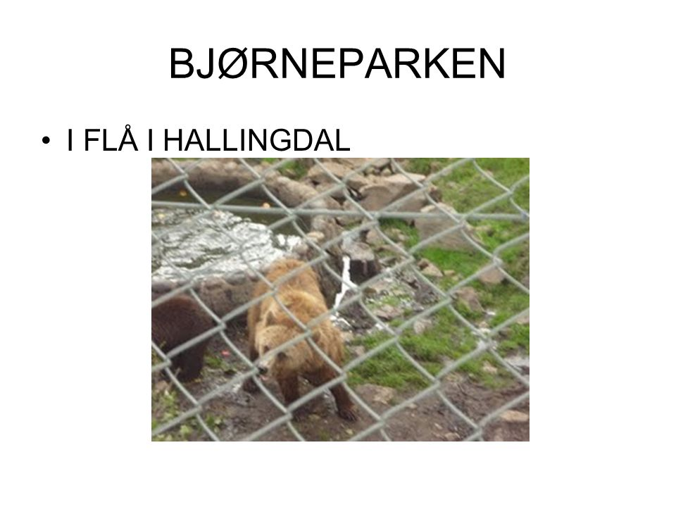 BJØRNEPARKEN I FLÅ I HALLINGDAL