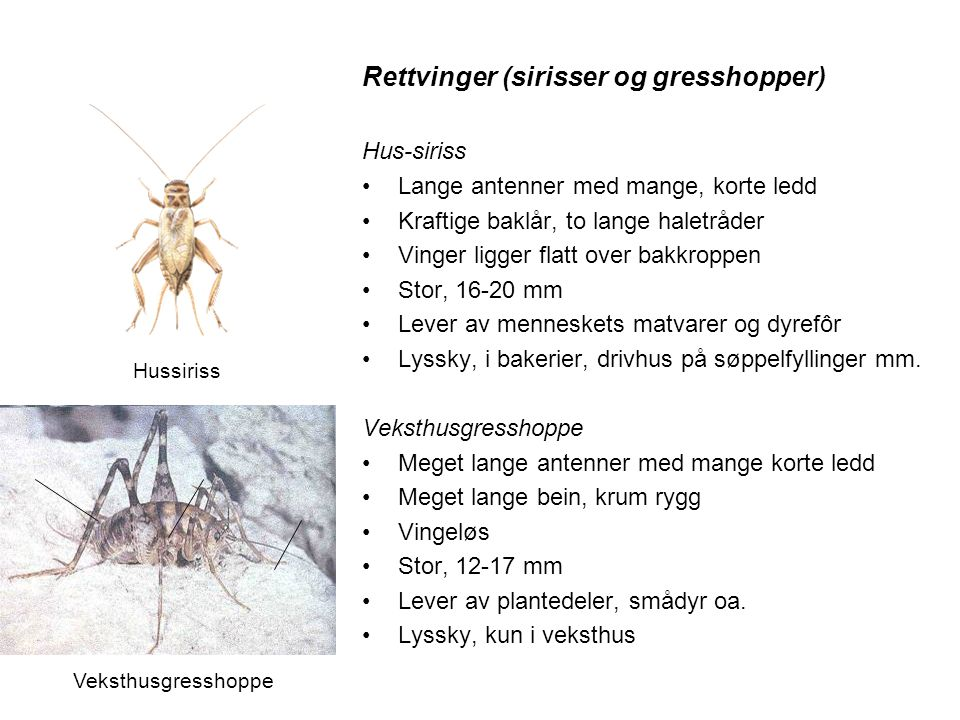 Rettvinger (sirisser og gresshopper)