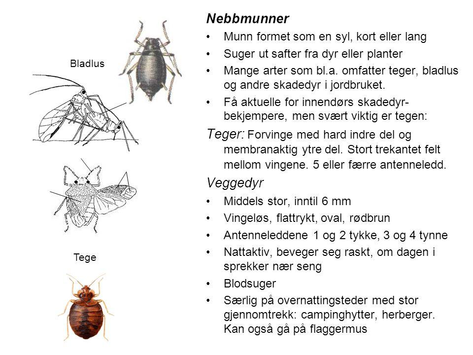 Nebbmunner Munn formet som en syl, kort eller lang. Suger ut safter fra dyr eller planter.